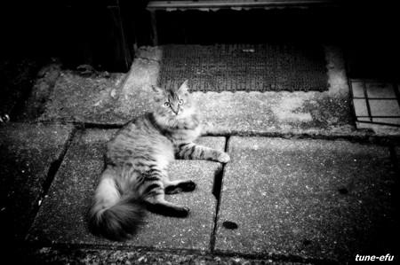 街猫298