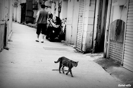街猫321