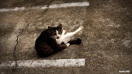 街猫324