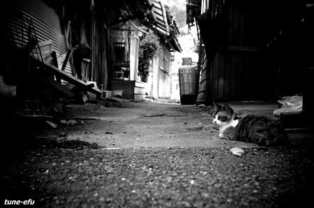 街猫332