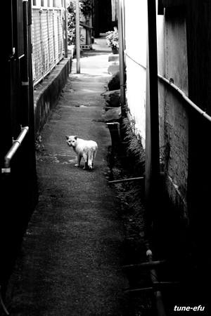 街猫339