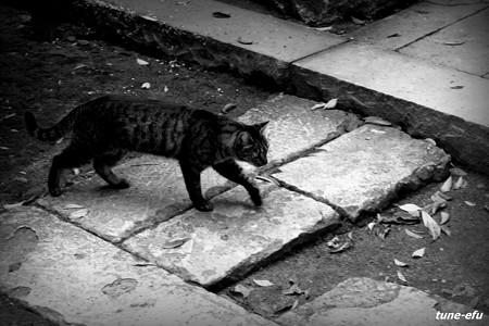 街猫344
