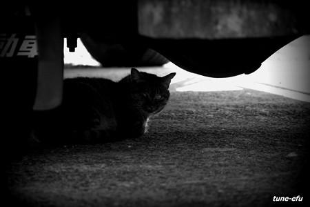 街猫346