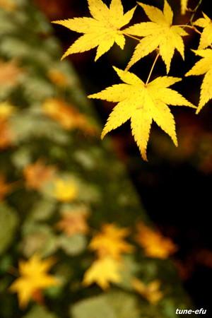 季節は秋#5