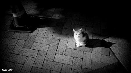街猫352