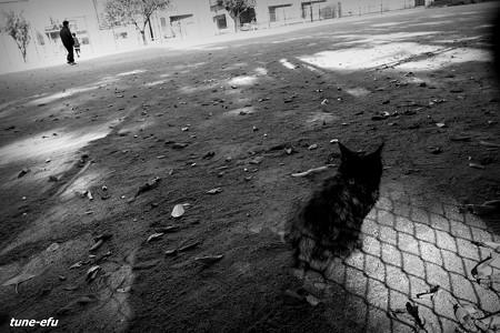 街猫354