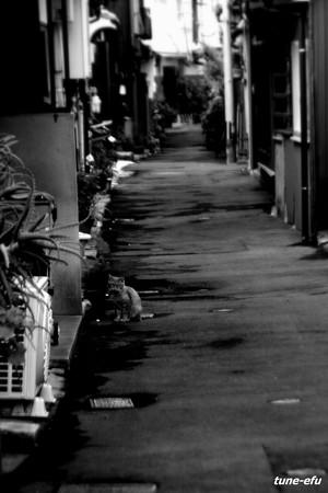 街猫355