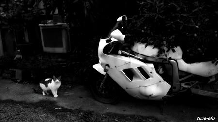 街猫359