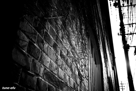 蔦枯れの壁