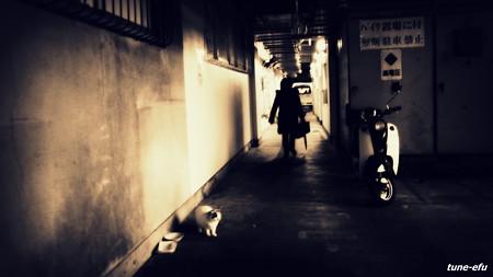 街猫的日常・・