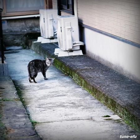 街猫365