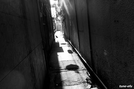 街猫373