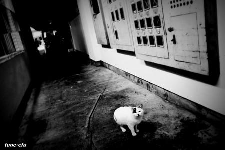 街猫378