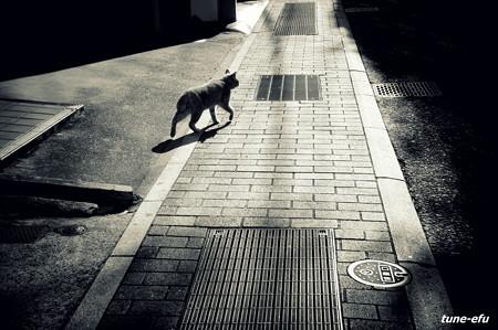 街猫381