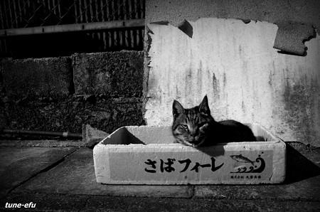 街猫391