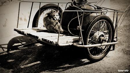 街猫408
