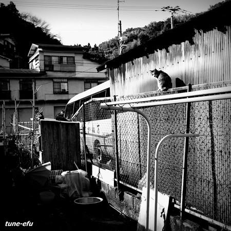 街猫410