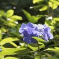 写真: 陽が射す花