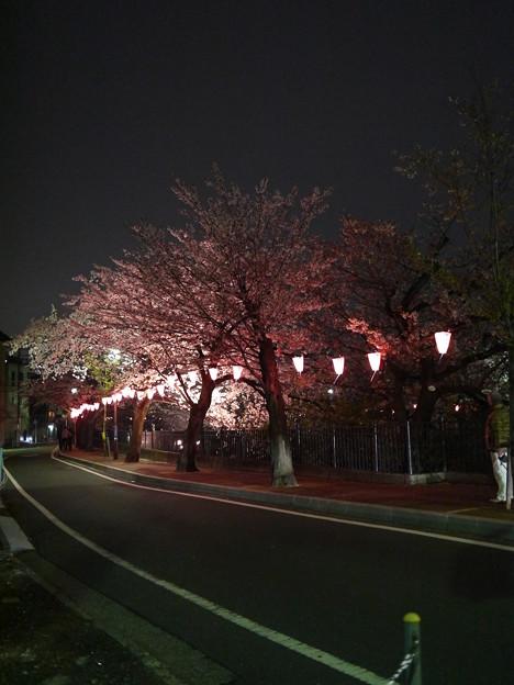 夜桜も続く
