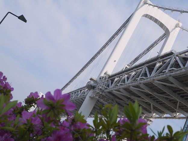 見上げれば虹の橋