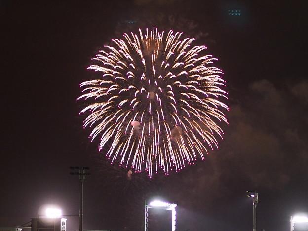 Firework!!