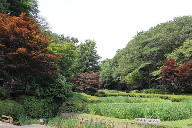 菖蒲田からの風景