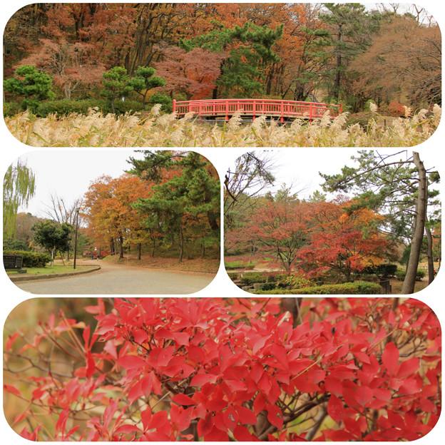 こども自然公園(2013/12/8)