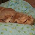 Photos: 福々しい寝顔
