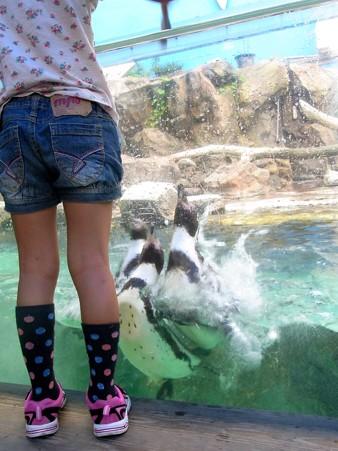 20120715 松島 ペンギンランチ05
