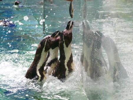 20120715 松島 ペンギンランチ12