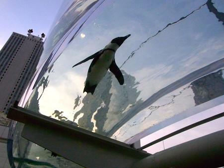 20120729 サンシャイン ペンギンアクアリング02