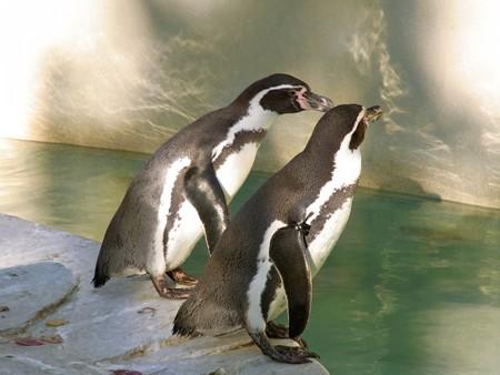 20121104 千葉 秋のペンギンプール01
