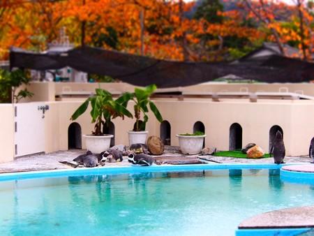 20121124 京都動 ペンギンプール