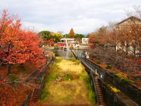 20121124 京都動 紅葉02