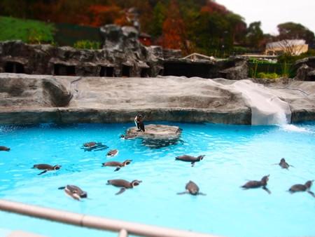 20121222 日本平 ペンギンプール05