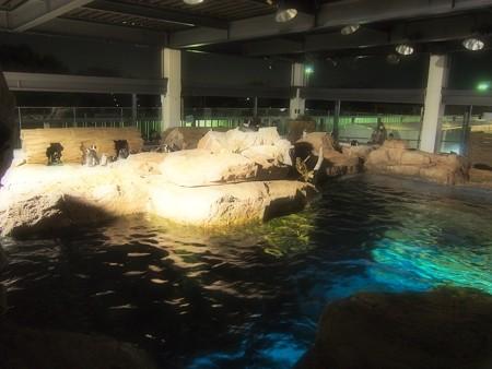 20130209 京都水 夜の水族館01