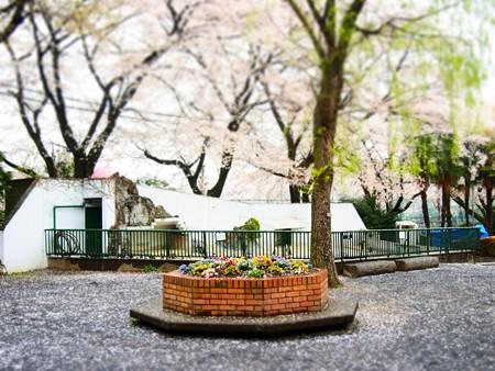 20130330 羽村 桜はむら03