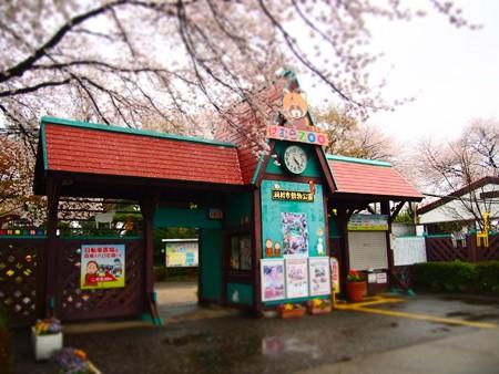 20130330 羽村 桜はむら01