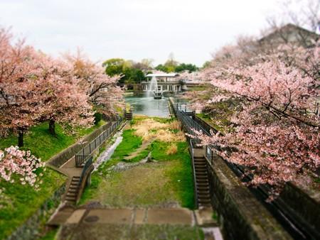 20130406 京都 琵琶湖疎水01