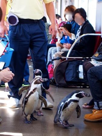 20130413 志摩 ペンギン列車09