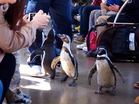 20130413 志摩 ペンギン列車08