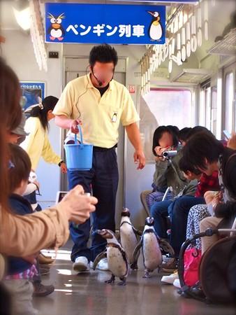 20130413 志摩 ペンギン列車07