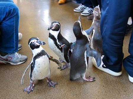 20130413 志摩 ペンギン列車20