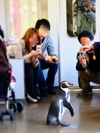 20130413 志摩 ペンギン列車14