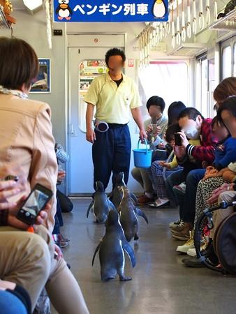20130413 志摩 ペンギン列車32