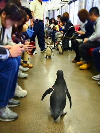 20130413 志摩 ペンギン列車30