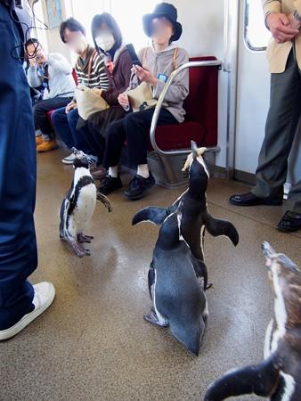 20130413 志摩 ペンギン列車27