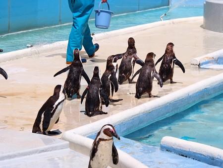 20130413 志摩 ペンギンランチ11