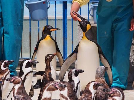 20130413 志摩 ペンギンランチ10