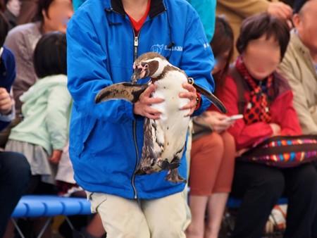 20130414 鳥羽 ペンギンのお散歩12